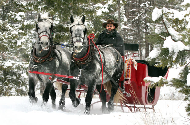 Teamster And His Draft Horses Keep Sleigh Skills Alive