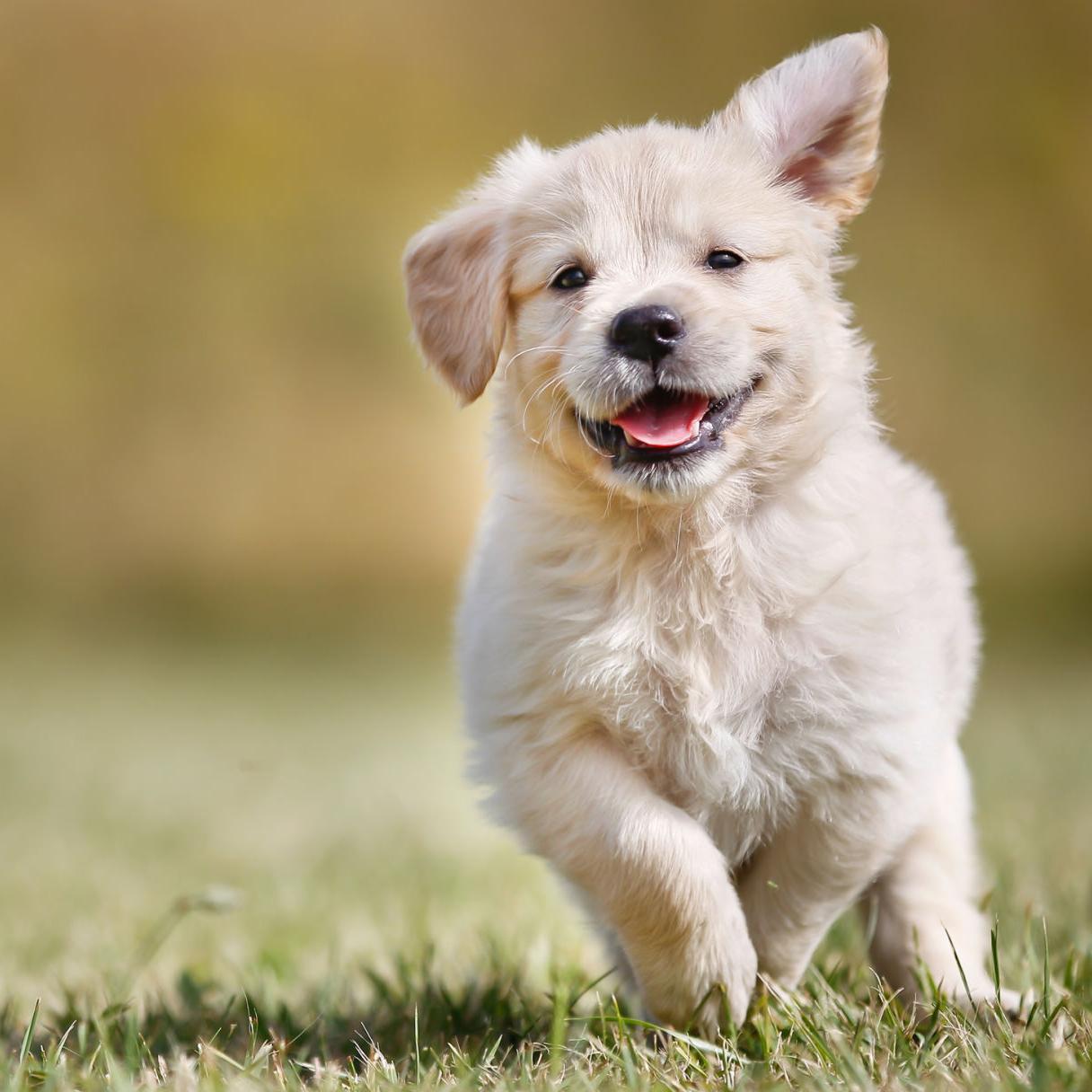 In Defense Of Commercial Pet Breeders Columnists