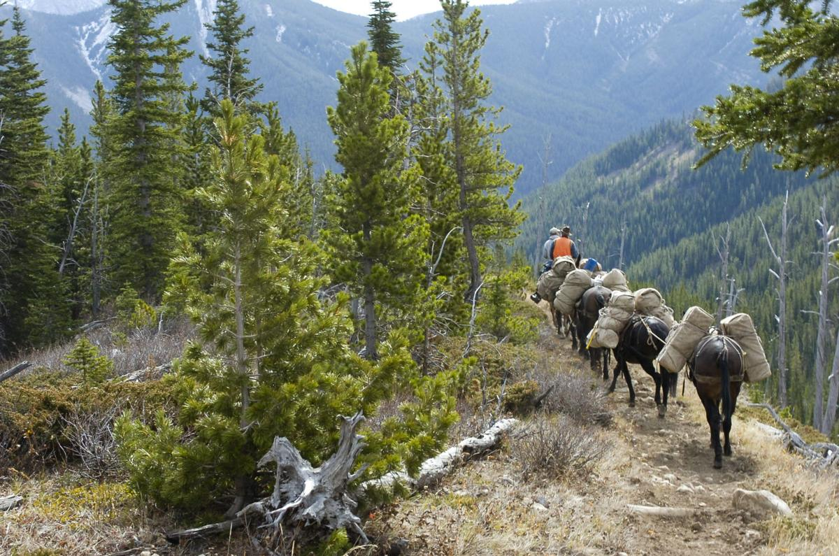 Outfitter in the Bob Marshall Wilderness
