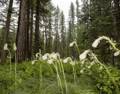 062513 beargrass 1 jr