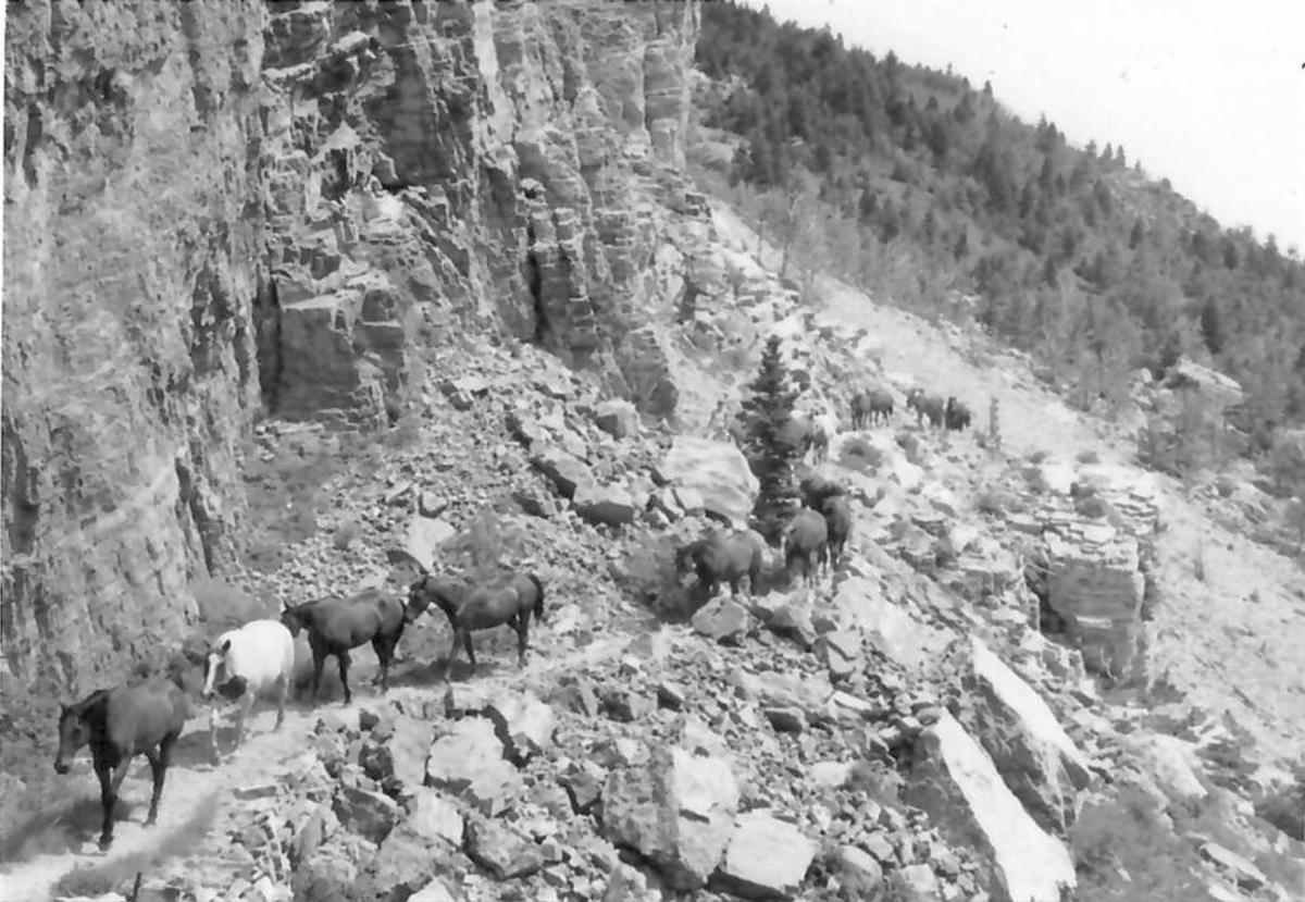 A string of horses is led down a rocky trail.