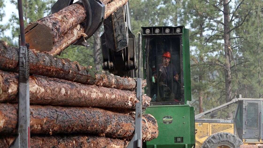 Bitterroot group sues to stop timber sale