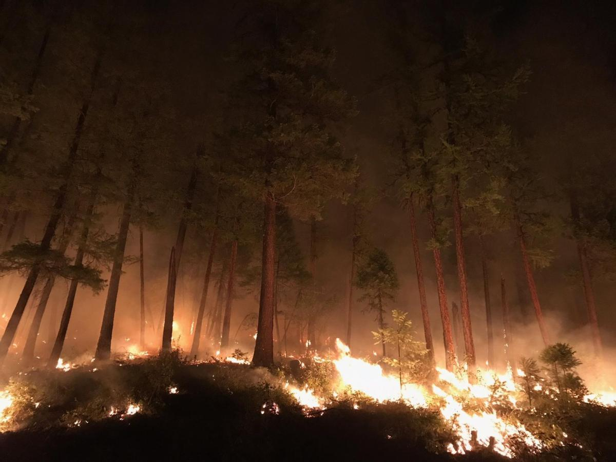 A night burn on the Gibralter Ridge Fire burns in a stand of Ponderosa Pines