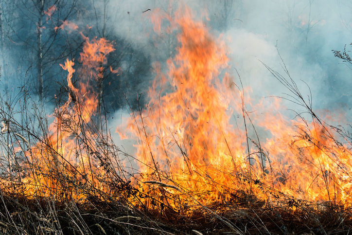 Rice Ridge Fire Sunday Morning Update