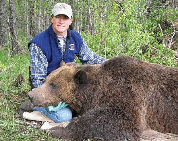 Big Grizzly Killed