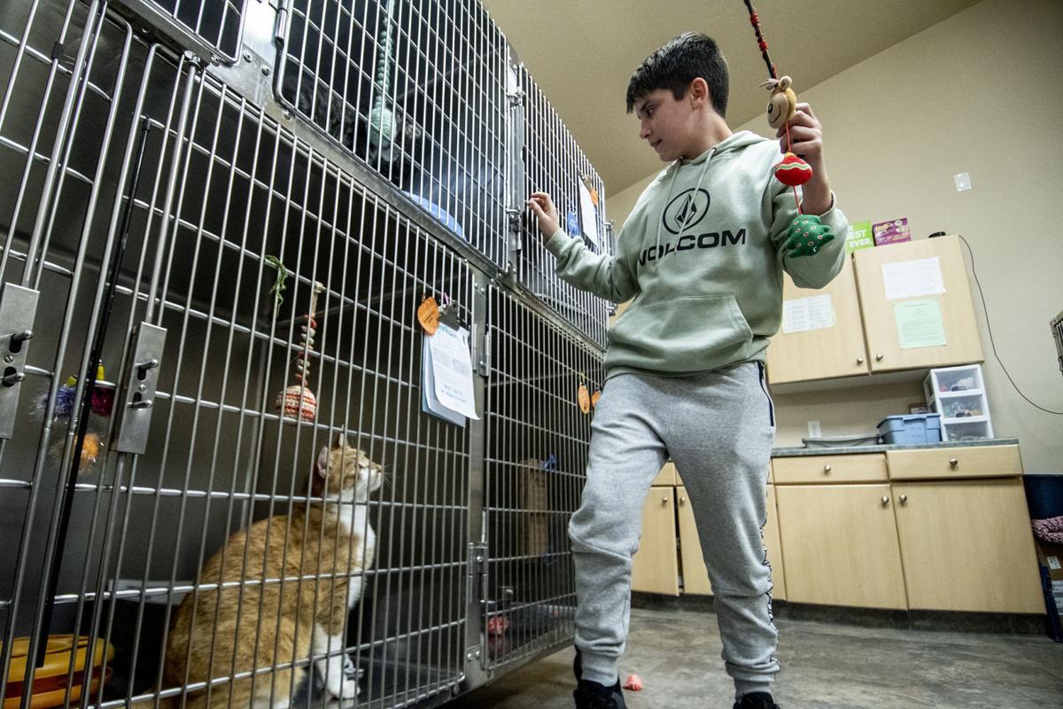 Cat Adoption 01