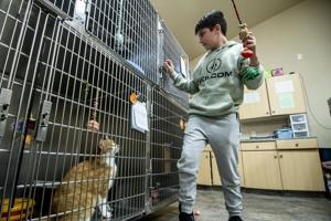 Humane Society adoptions: Pumpkin spice everything now includes cats