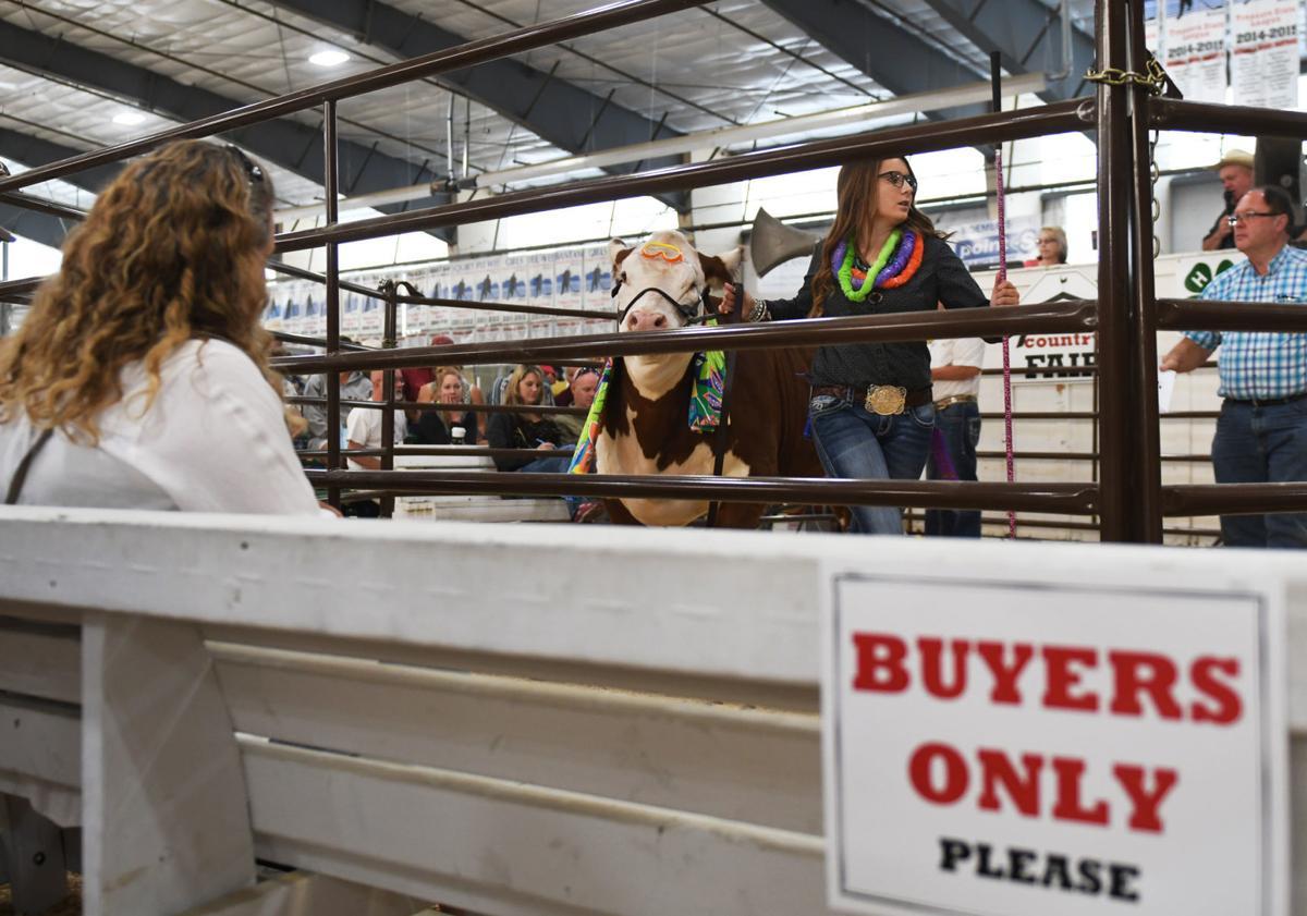 Livestock Auction 2