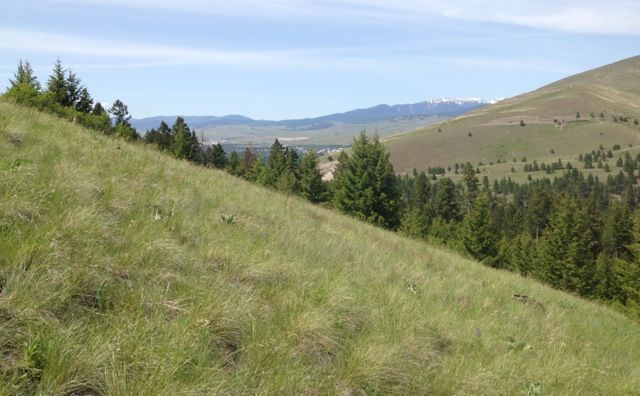 Barmeyer-Pattee Canyon Open Space Acquisition