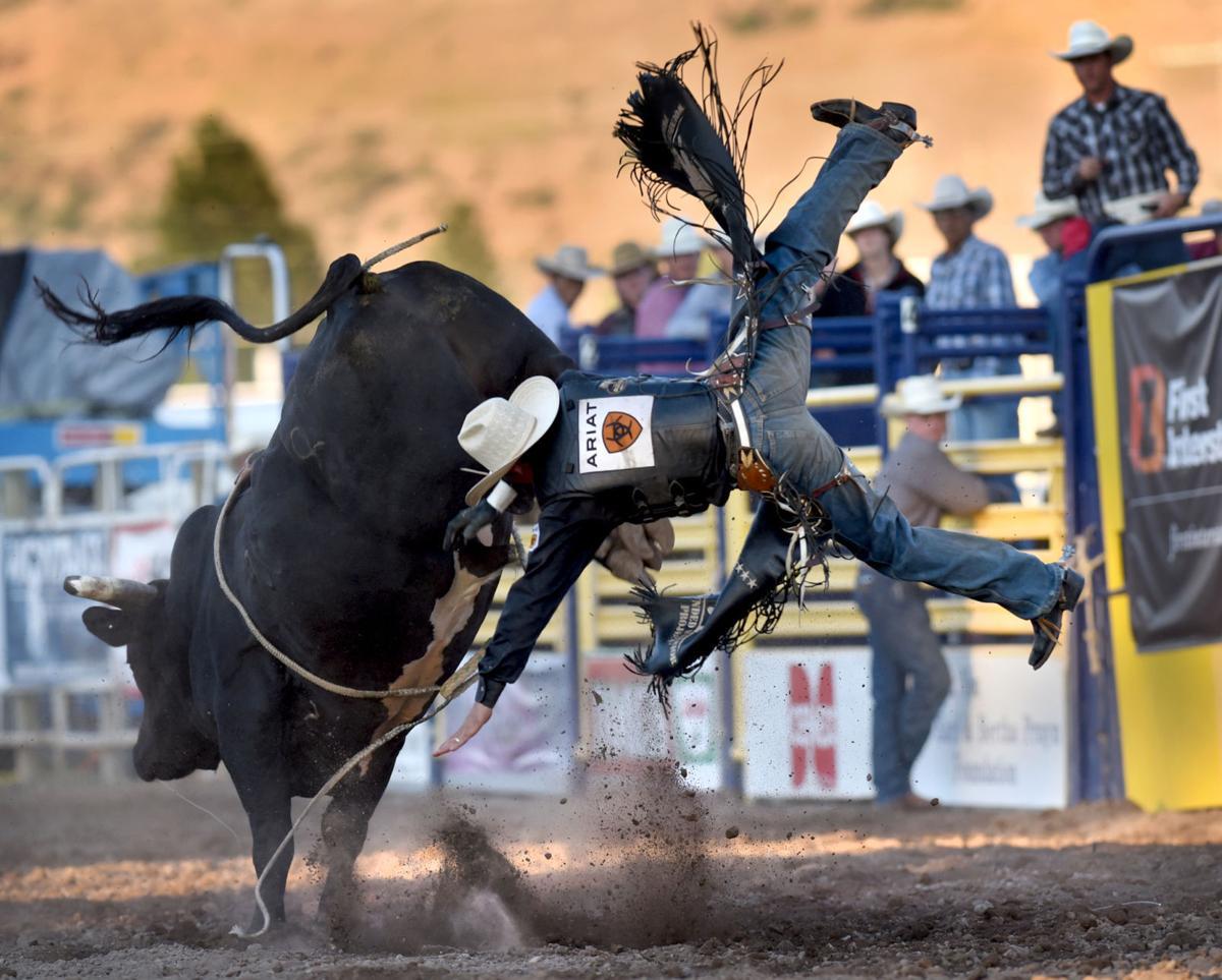081116 bull1 kw.jpg