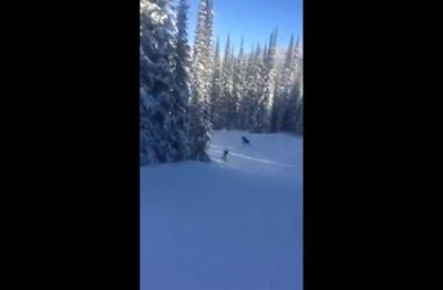 Moose video preview