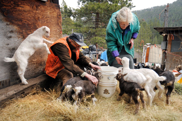 Eugene and Evelyn Gisselbeck feed their 11 baby goats