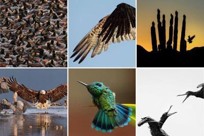 Five Valleys Audubon