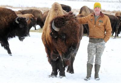 Bitterroot Bison file