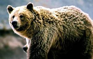 Woman mauled by grizzly bear near Gardiner