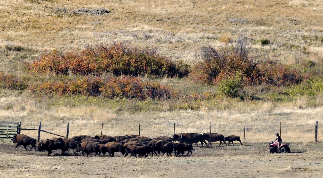021416 bison range file kw.jpg