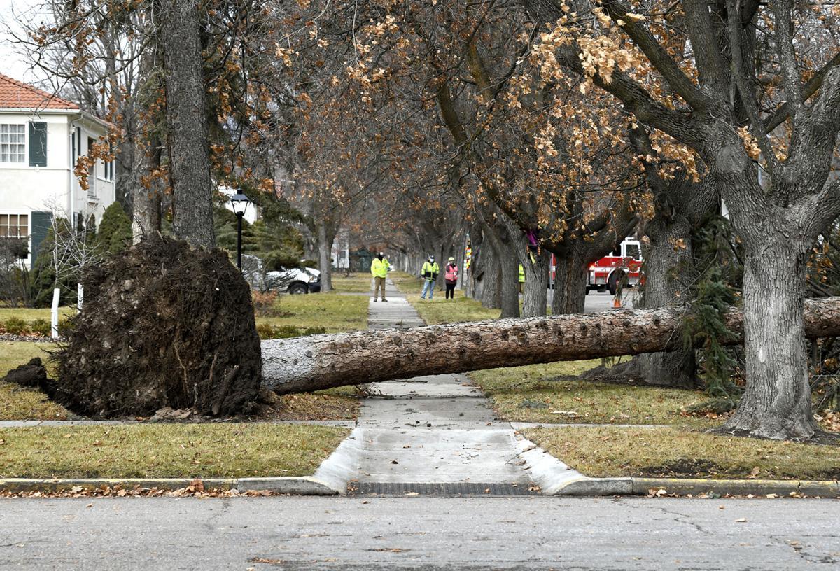 Windstorm in Missoula 13