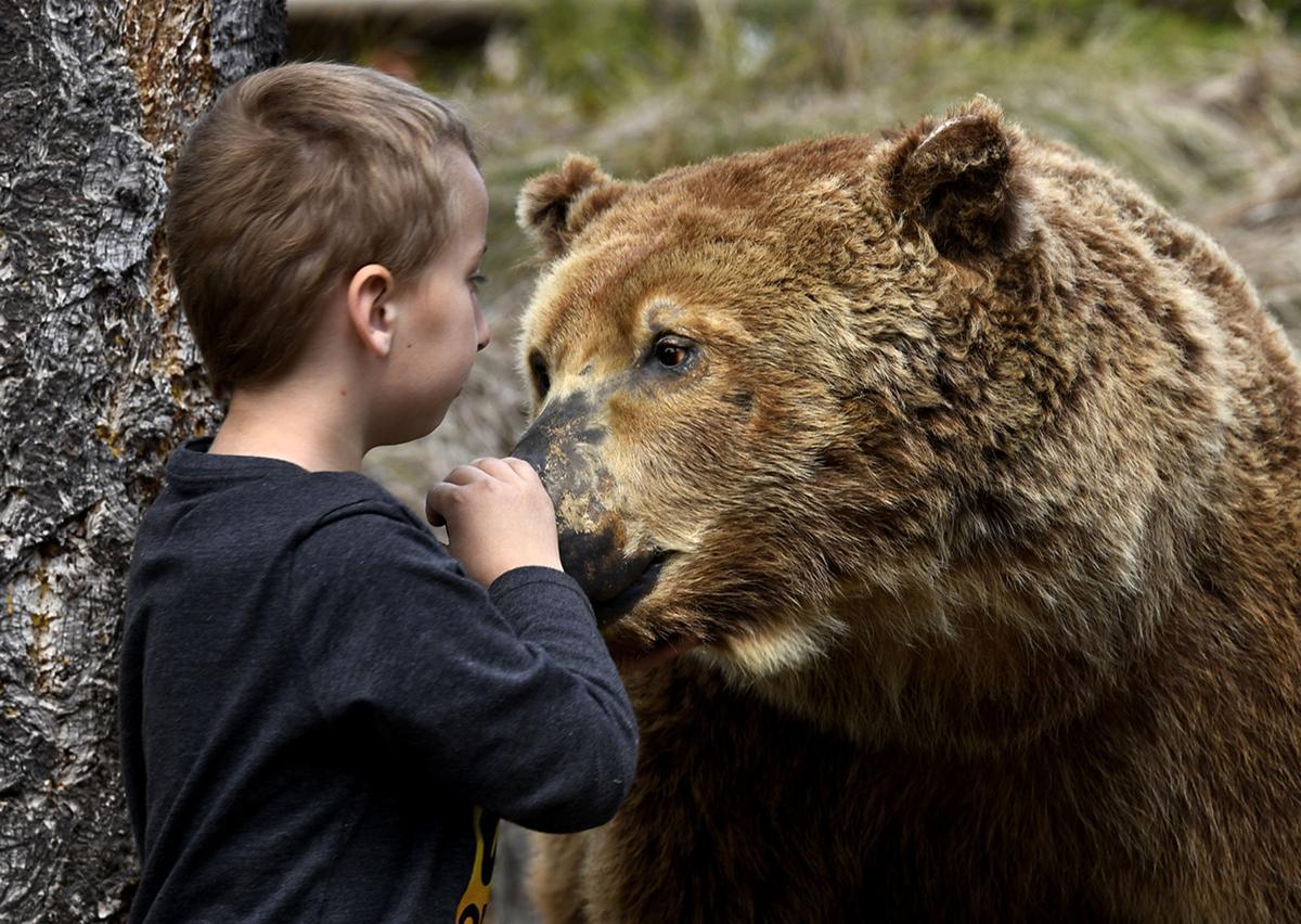 Bear Awareness 2