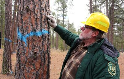 Forest stewardship: Logging contract awarded for Bass Creek Recreation Area
