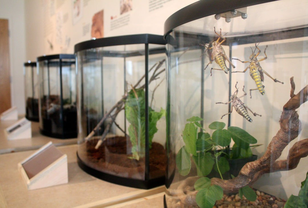 Missoula Insectarium Showcases Important Role Of Bugs