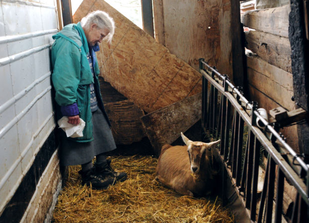 Evelyn Gisselbeck tends to a pregnant goat