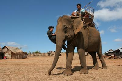 'The Last of the Elephant Men'