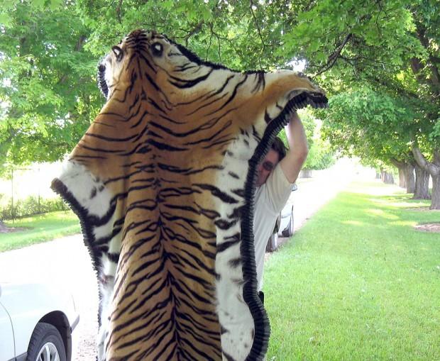 Black Tiger Pelt