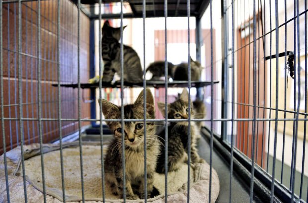 missoula area animal shelters filling up seek new homes