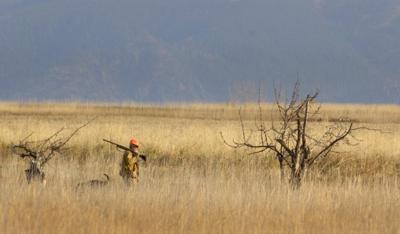 011311 pheasant hunt kw