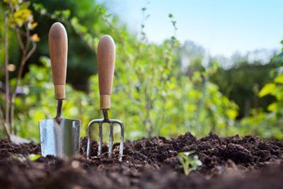 Master Gardening garden