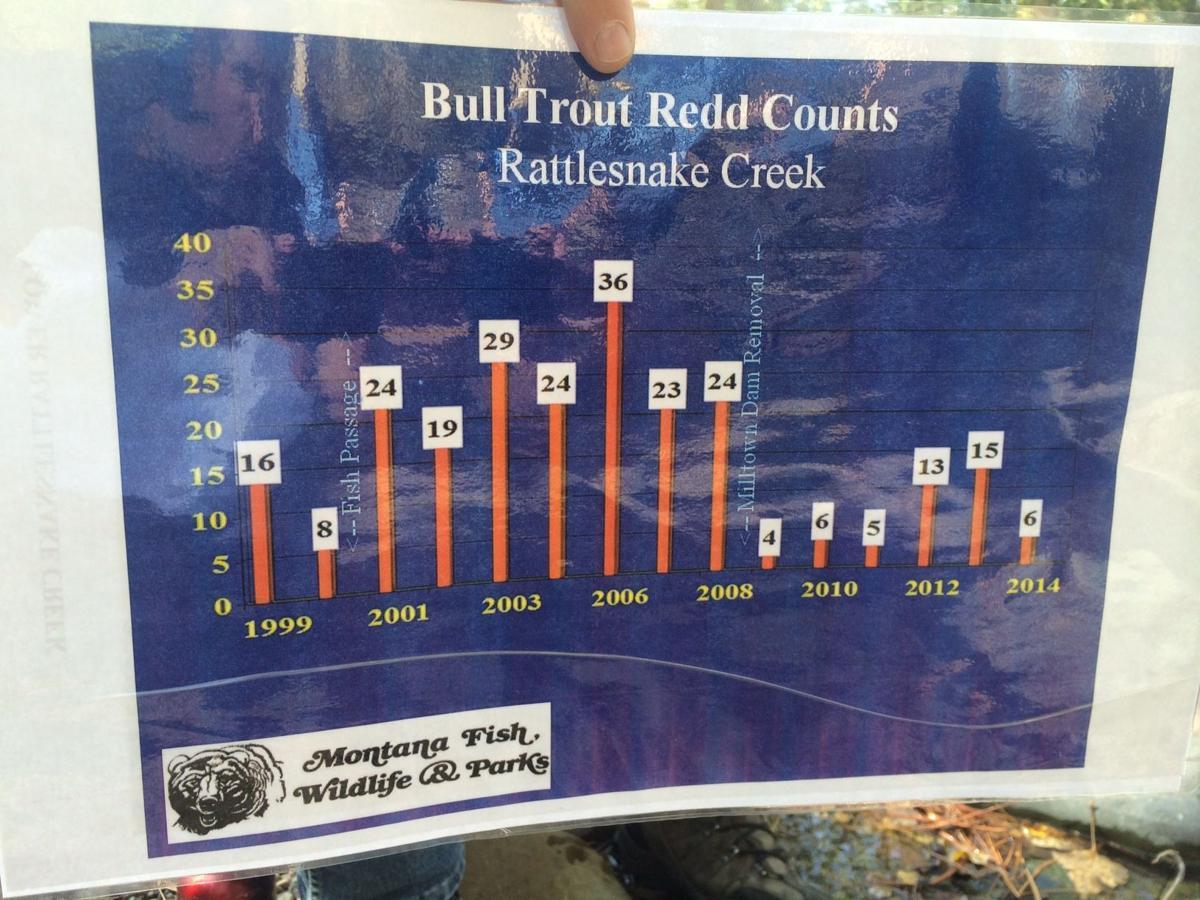 Bull trout redd counts in Rattlesnake Creek
