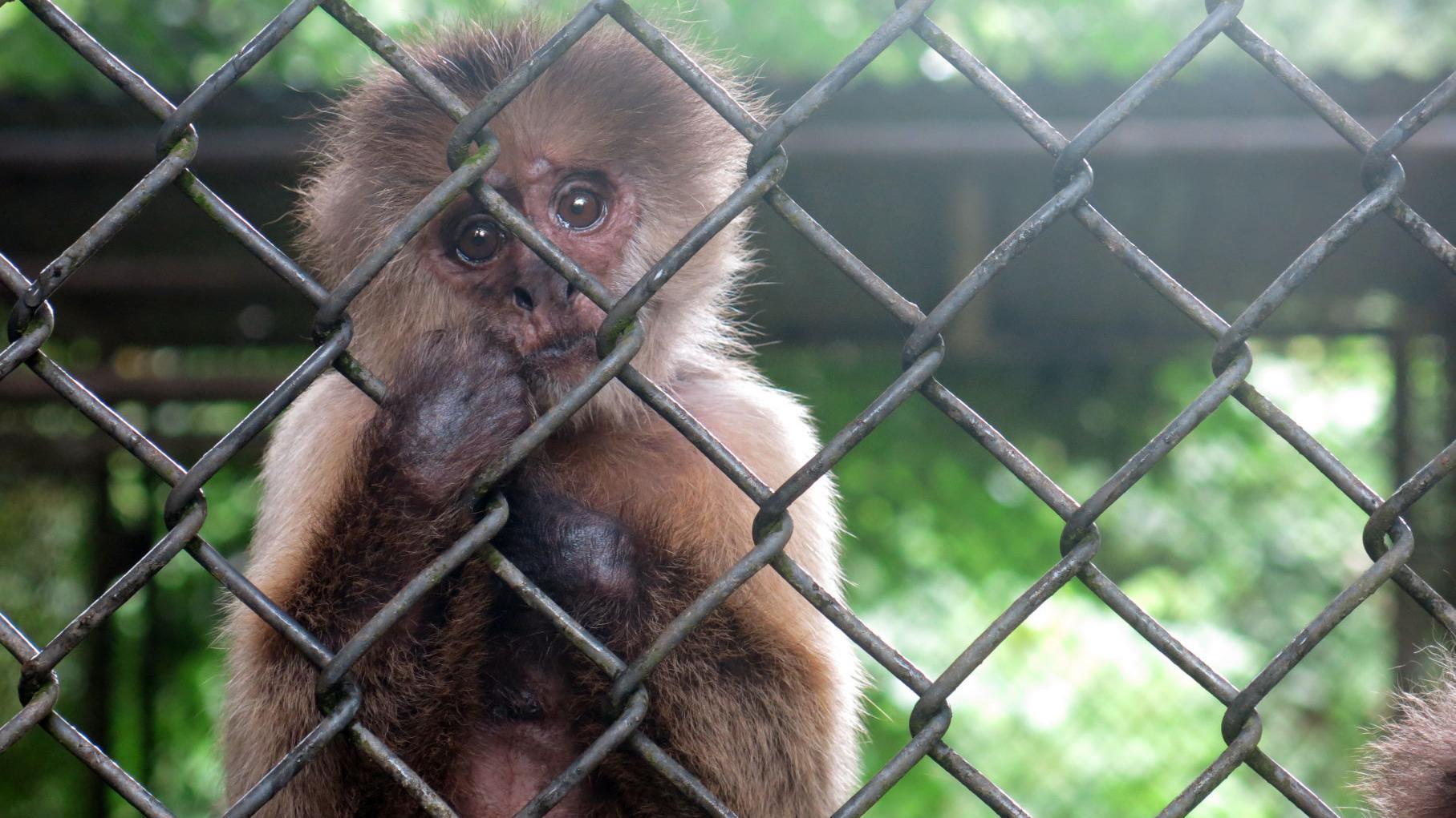 Photos: Economic crisis hits Puerto Rico's only zoo