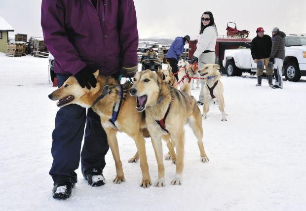 021113 dog sledding LEAD FINAL