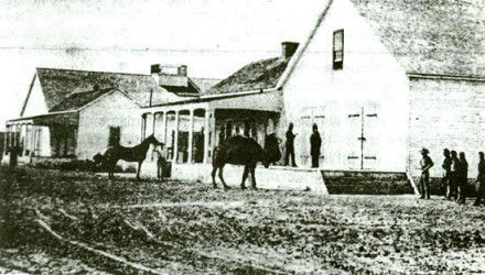 Camels in mining town