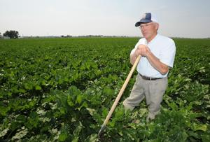 Genetically modified crops have helped U.S. agriculture, Montana economist says