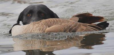 Waterfowl hunting file photo