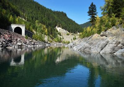 Middle Fork Flathead stock