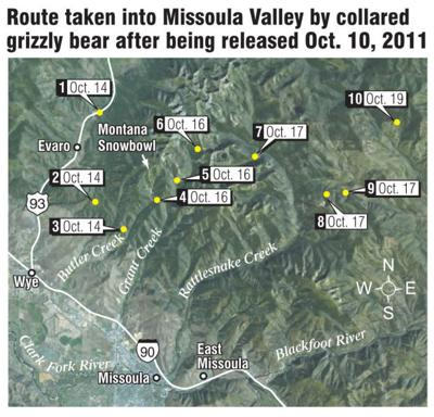 Route of collared grizzly near Missoula