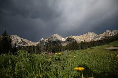 Untamed Montana