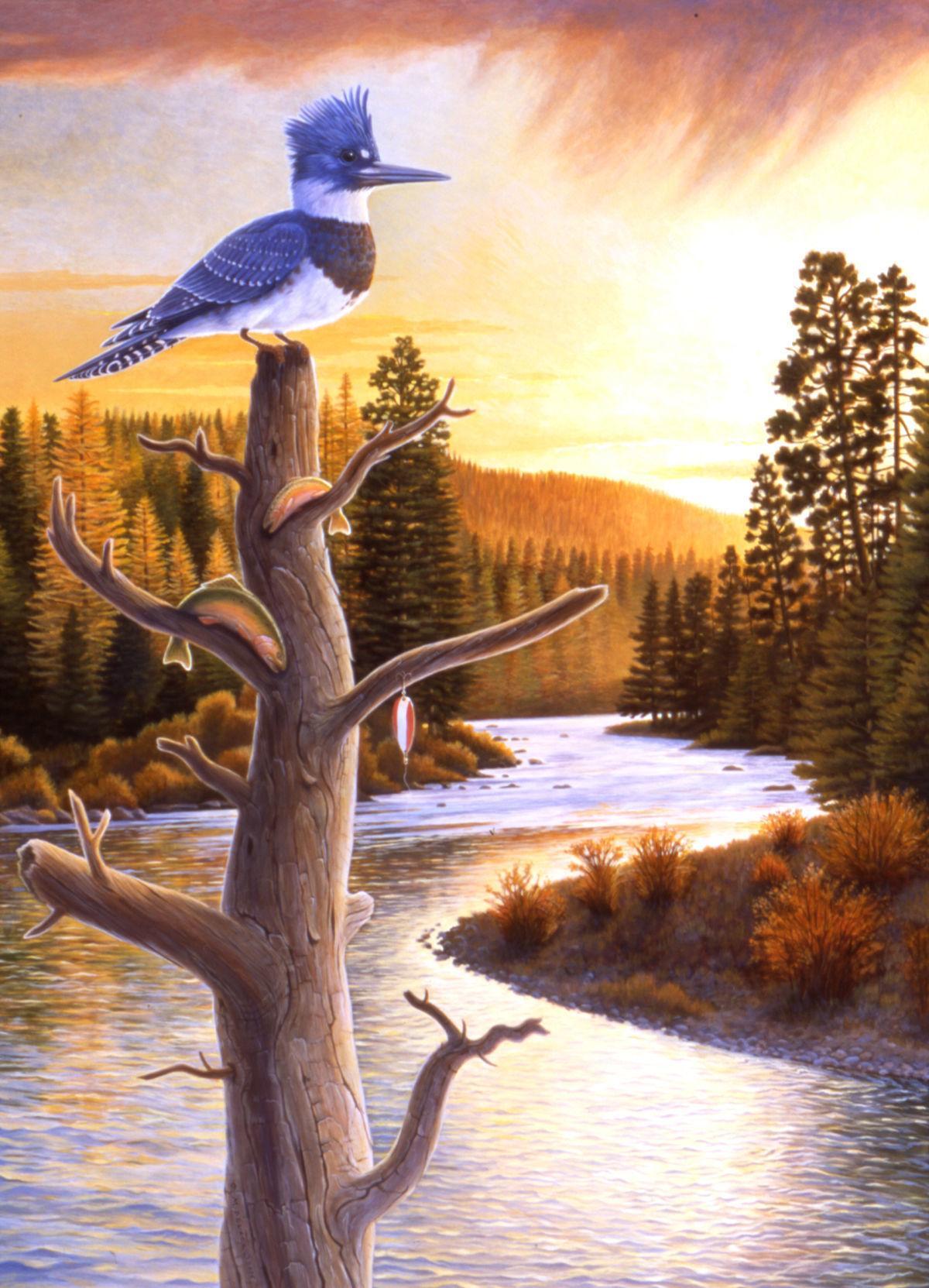 Dolack, 'Kingfisher'