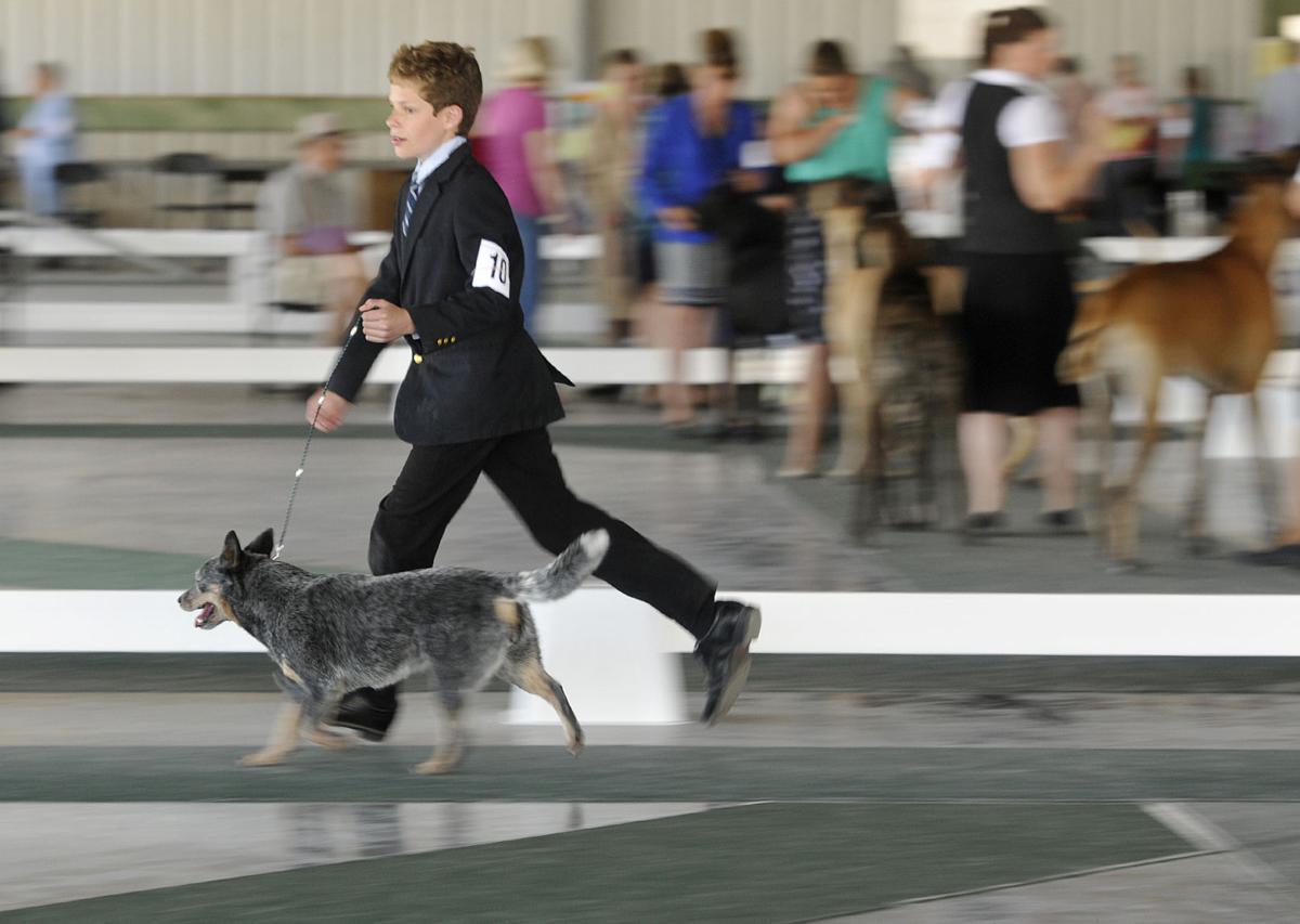 062716 dog show-2-tm.jpg