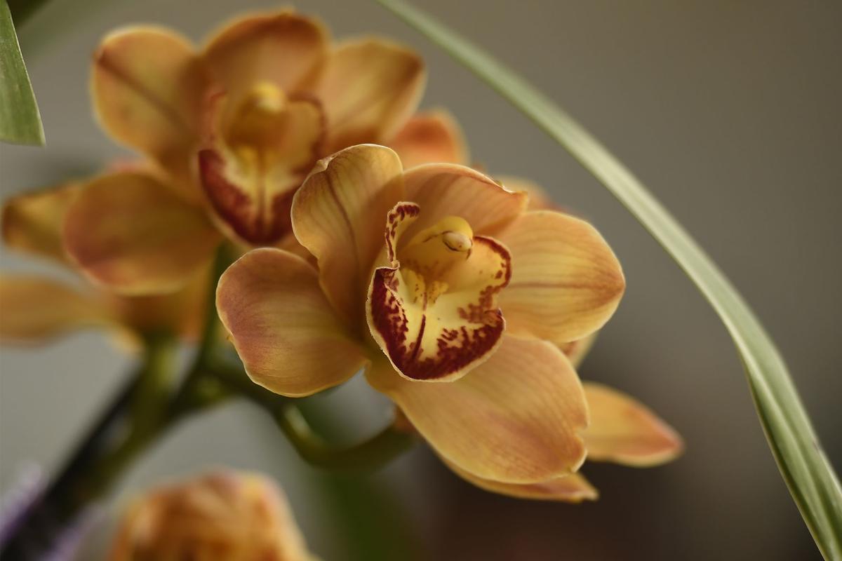 021019 orchids-2-tm.jpg