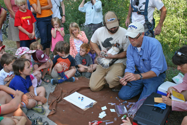 Missoula osprey sighted in Texas