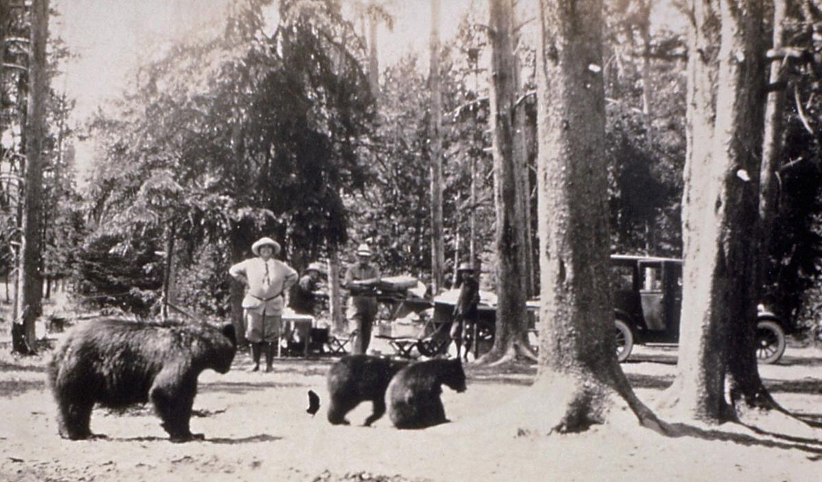Bears in camp