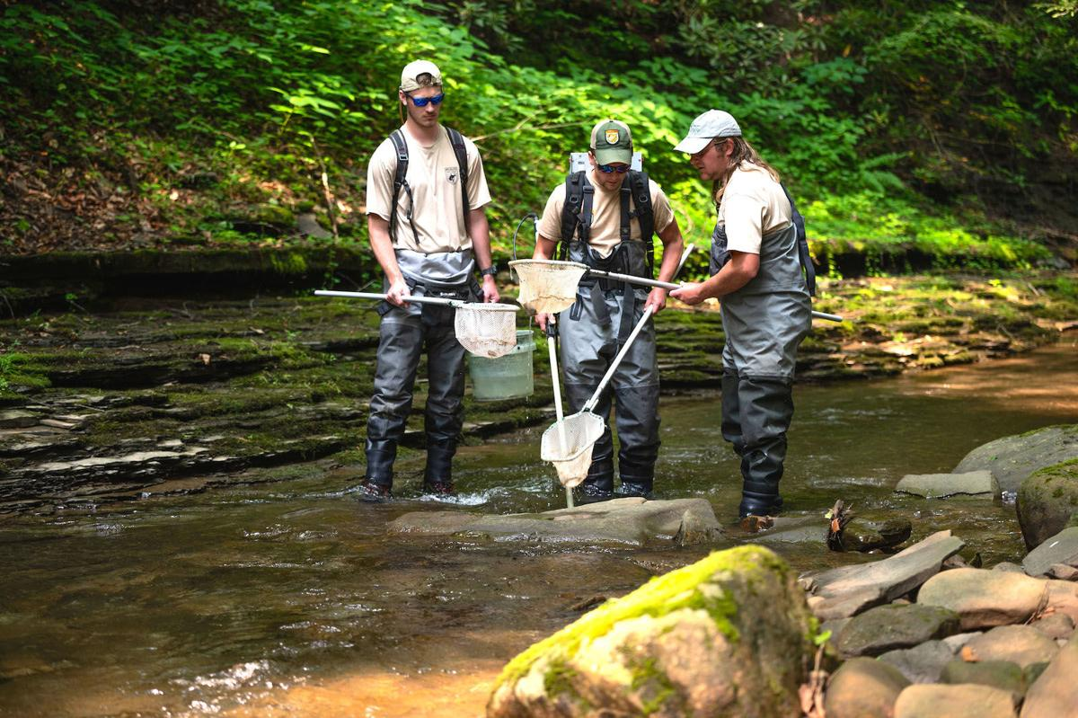 DNR with nets