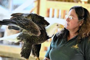 Raptors, butterflies and art on display at MCWA event