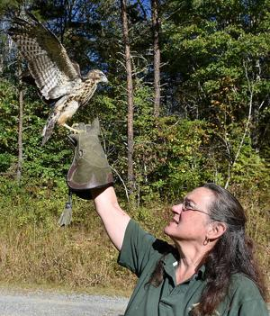 Watershed group to host raptor exhibit, other events