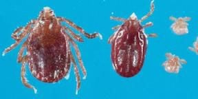 Longhorned tick discovered in state