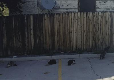 This colony of feral cats lives behind a business