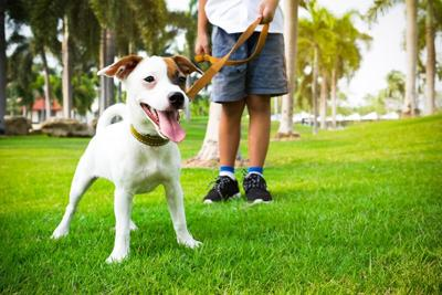 COLUMN: Kids, dogs and hikes: a winning combination
